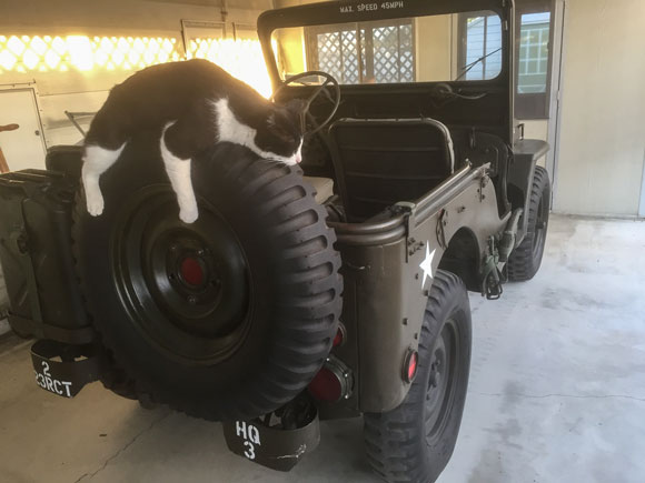 Clint Matthes' 1952 Willys M38