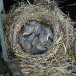 Bird Story by Jim McCracken