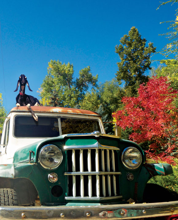 Erin King's Willys Station Wagon