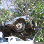 A Willys Jeep in a Tree Restored in Honor of All Jamaicans Who Service in WWII